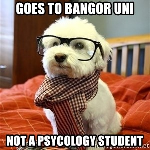 hipster dog - Goes to Bangor Uni not a psycology student