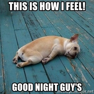tired dog - This is how I feel! Good night guy's