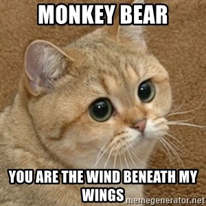 motherfucking game cat - MONKey bear You are the wind beneath my wings