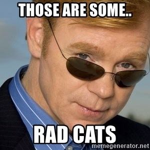 Horatio Caine - those are some.. rad cats