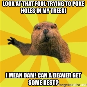 grumpy beaver - Look at that fool trying to poke holes in my trees! I mean dam! can a beaver get some rest?