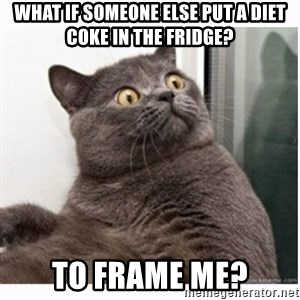 Conspiracy cat - What if someone else put a diet coke in the fridge? To frame me?