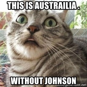 scared cat - This is austrailia . without johnson