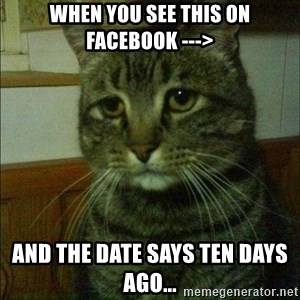 Depressed cat 2 - when you see this on facebook ---> And the date says ten days ago...