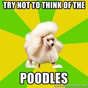 Pretentious Theatre Kid Poodle - try not to think of the  poodles
