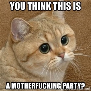 motherfucking game cat - You think this is  a motherfucking party?
