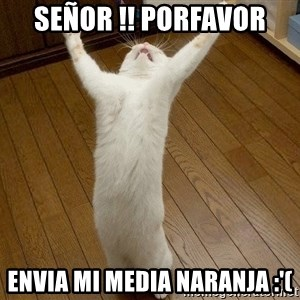 praise the lord cat - SEÑOR !! PORFAVOR Envia mi media naranja :'(