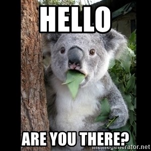 Koala can't believe it - hello are you there?