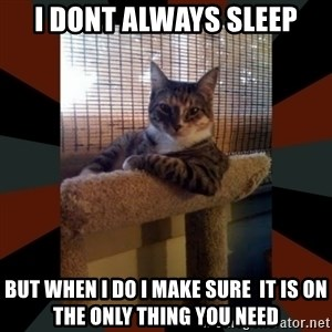 The Most Interesting Cat in the World - i dont always sleep but when i do i make sure  it is on the only thing you need