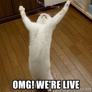 praise the lord cat -  OMG! We're Live