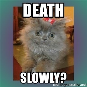 cute cat - death slowly?