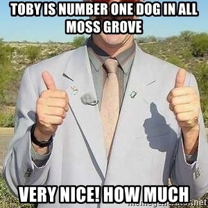 borat - Toby is number one dog in all moss grove Very nice! How much