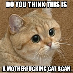 motherfucking game cat - Do you think this is a motherfucking cat scan