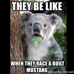 Koala can't believe it - they be like   when they race a built mustang