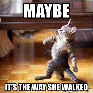 walking cat - maybe  it's the way she walked