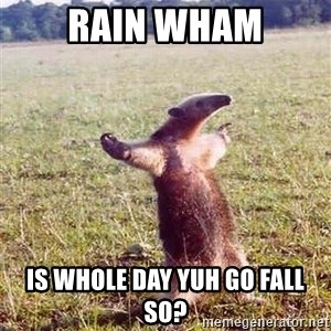 Anteater - Rain Wham Is Whole day yuh go fall so?
