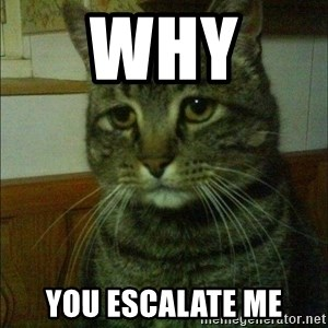 Depressed cat 2 - why  you ESCALATE me