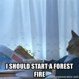 Sophisticated Cat -  I should start a forest fire