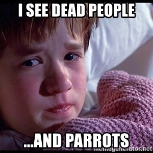 Sixth Sense Boy - i see dead people ...and parrots