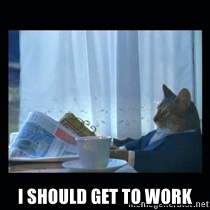 1% cat -  i SHOULD GET TO WORK