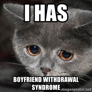 Sadcat - i has boyfriend withdrawal syndrome