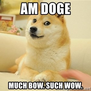 so doge - am doge much bow. such wow.