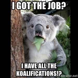 Koala can't believe it - i got the job? i have all the koalifications!?