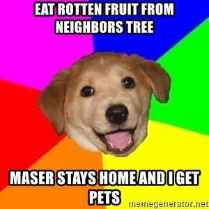 Advice Dog - Eat rotten fruit from neighbors tree maser stays home and i get pets