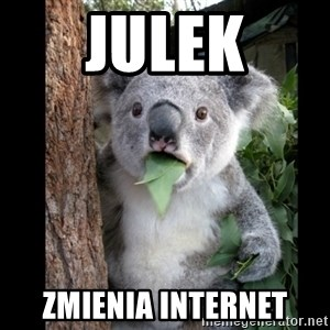 Koala can't believe it - JULEK ZMIENIA INTERNET
