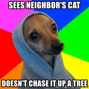 Good Guy Greg's dog - Sees neighbor's cat Doesn't chase it up a tree