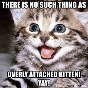 HAPPY KITTEN - THERE IS NO SUCH THING AS OVERLY ATTACHED KITTEN! yay!