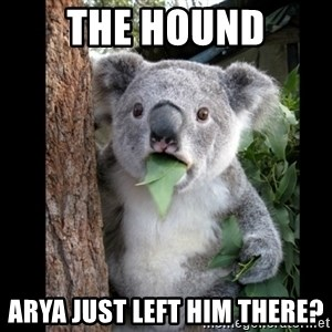 Koala can't believe it - The Hound arya just left him there?