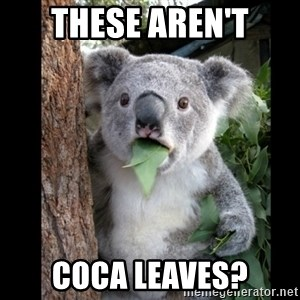 Koala can't believe it - THESE AREn't COCA leaves?