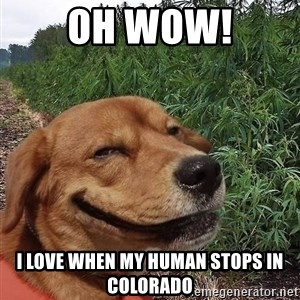 dogweedfarm - Oh Wow! I love when my human stops in colorado