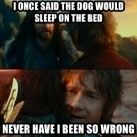 Never Have I Been So Wrong - I once said the dog would sleep on the bed  Never have I been so wrong