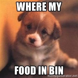 cute puppy - Where my Food in bin