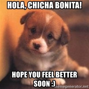 cute puppy - Hola, chicha bonita! Hope you feel better soon :)