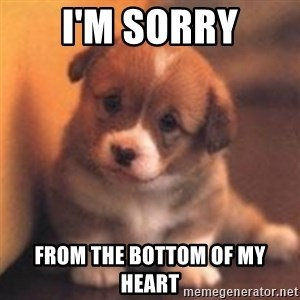 cute puppy - I'M Sorry From the Bottom of my heart