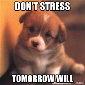 cute puppy - Don't stress Tomorrow will