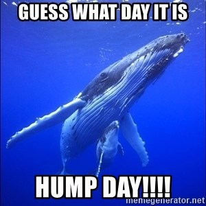 super dumb humpback whale - guess what day it is HUMP DAY!!!!