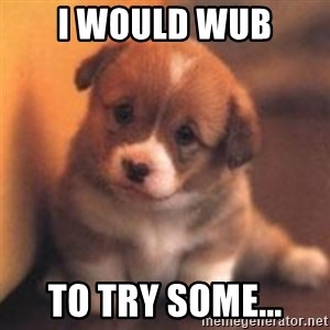 cute puppy - I would wub to try some...