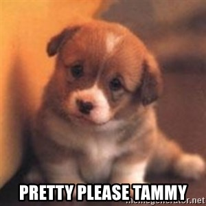 cute puppy -  pretty please tammy