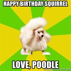 Pretentious Theatre Kid Poodle - Happy birthday squirrel love, poodle