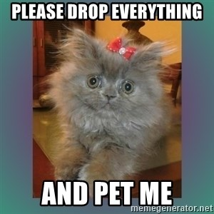 cute cat - Please drop everything  And pet me
