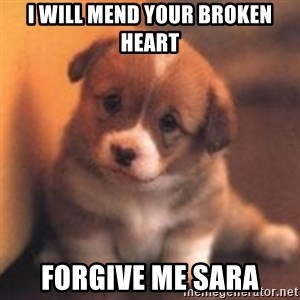 cute puppy - I will mend your broken heart forgive me sara