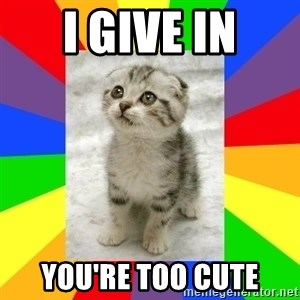 Cute Kitten - I give in you're too cute