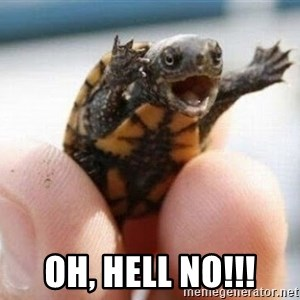 angry turtle -  oh, hell no!!!