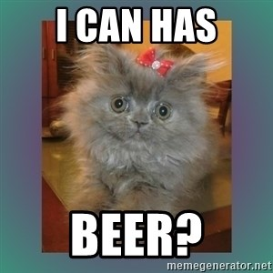 cute cat - i can has beer?
