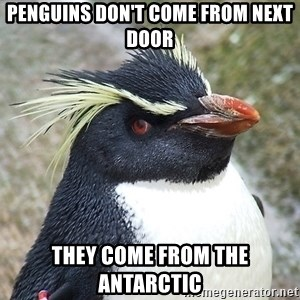 So What Penguin - penguins don't come from next door they come from the antarctic