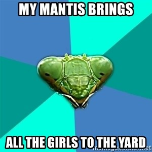 Crazy Girlfriend Praying Mantis - My mantis brings All the girls to the yard
